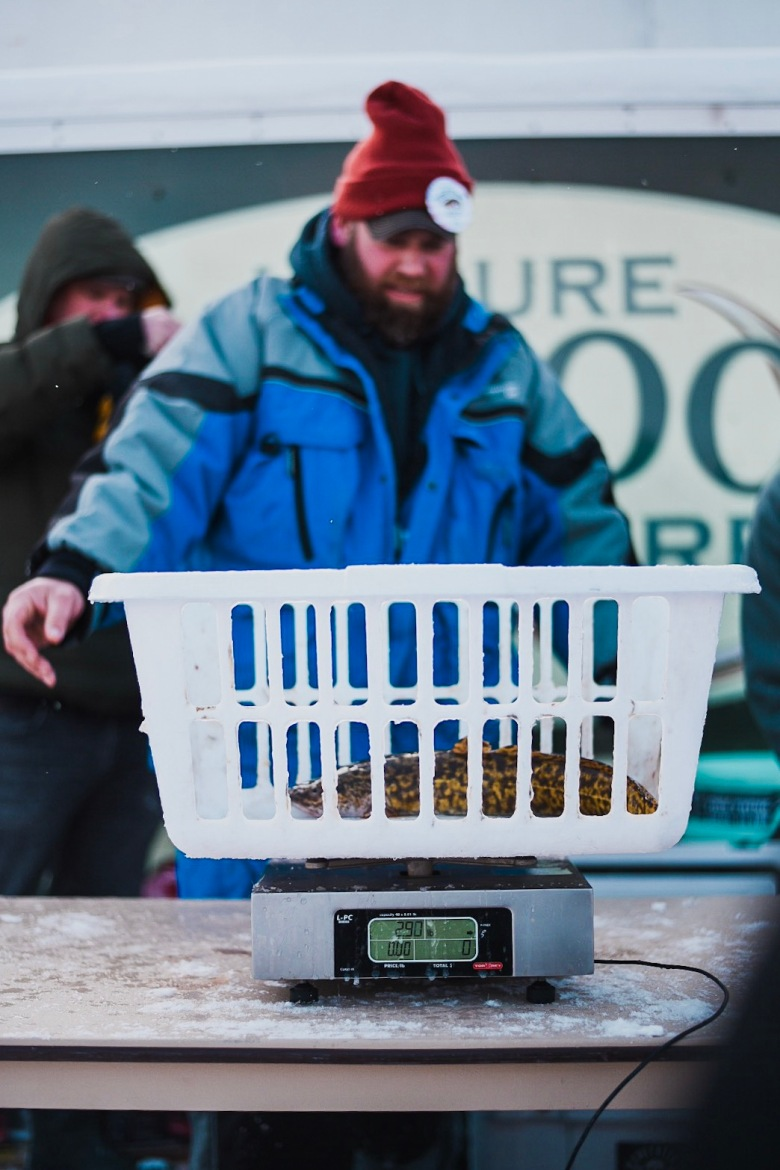 Eelpout weigh in