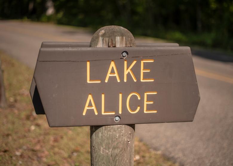 Lake Alice Hike MN